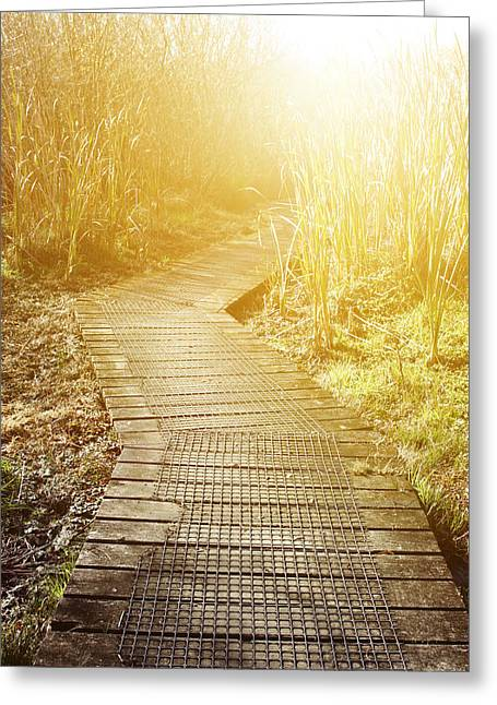 Swampland Greeting Cards - Swamp walk Greeting Card by Les Cunliffe