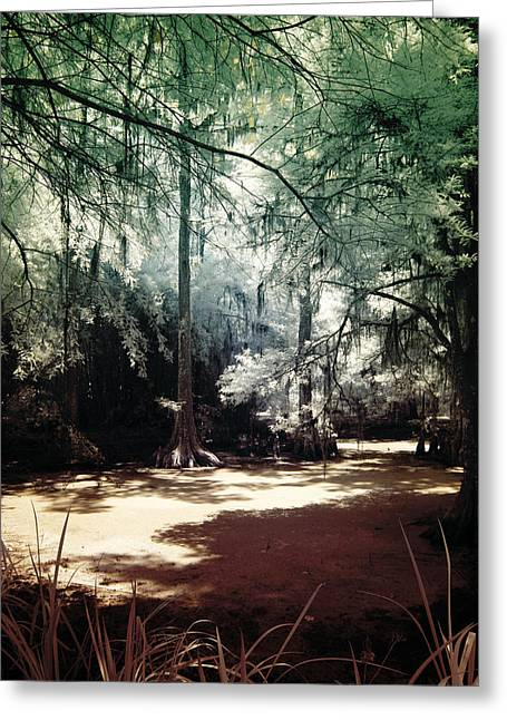 South Carolina Infrared Landscape Greeting Cards - Swamped Greeting Card by John Cardamone
