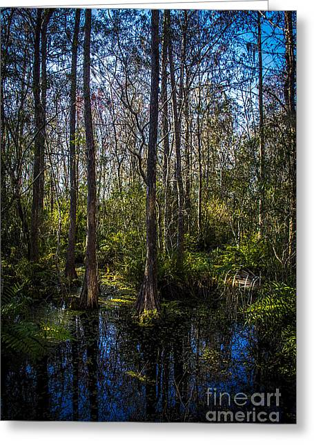 Swampland Greeting Card by Marvin Spates
