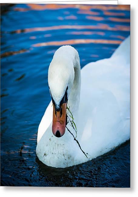 Pairs Greeting Cards - Swan 2 Greeting Card by Dobromir Dobrinov