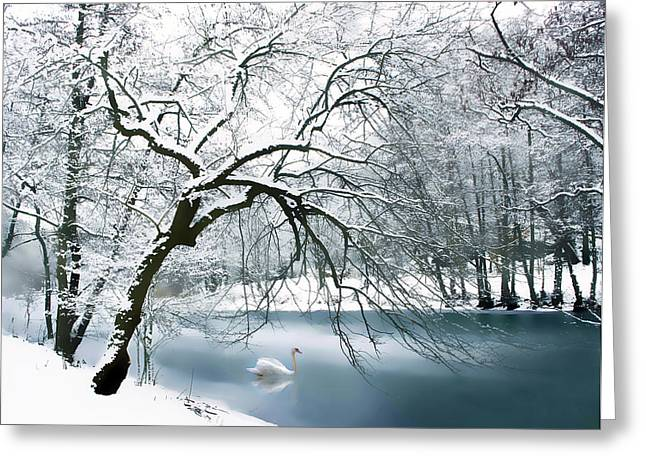 Winters Digital Greeting Cards - Swan a Swimming Greeting Card by Jessica Jenney