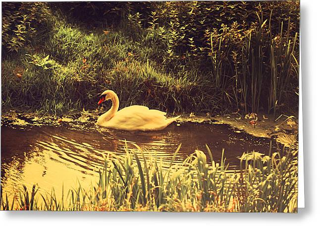 Ripples In The Water Greeting Cards - Swan at the Golden Lake Greeting Card by Jenny Rainbow