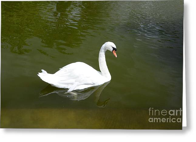 Aquatic Bird Greeting Cards - Swan Greeting Card by Bernard Jaubert