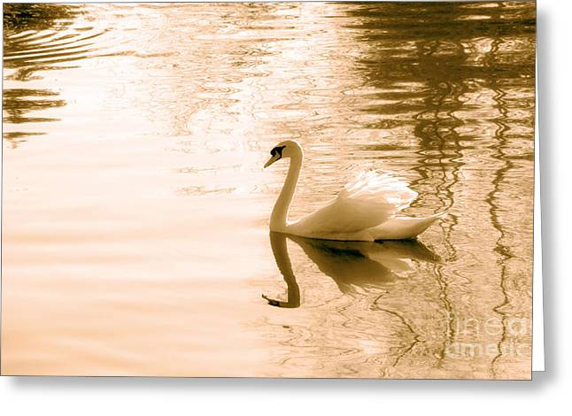 Swan Greeting Card by Charline Xia