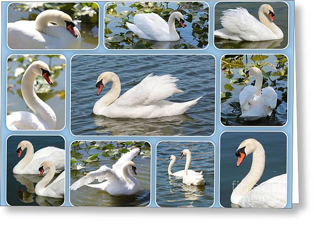 Swan Collage In Blue Greeting Card by Carol Groenen