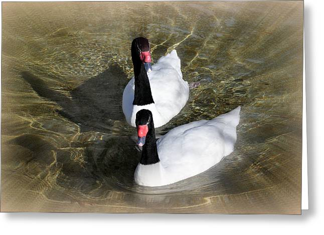 Swan Duo Greeting Card by Marty Koch