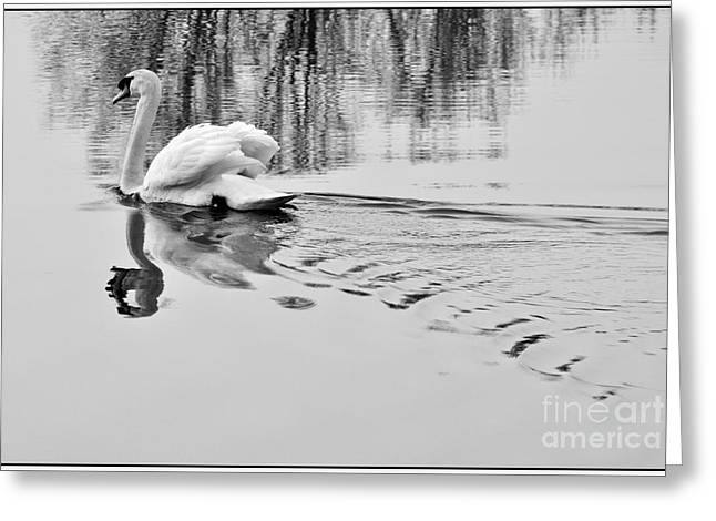 Reflection Of Trees In Water Greeting Cards - Swan elegance Greeting Card by Simona Ghidini
