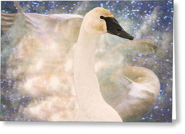 Swans... Greeting Cards - Swan Journey Greeting Card by Kathy Bassett