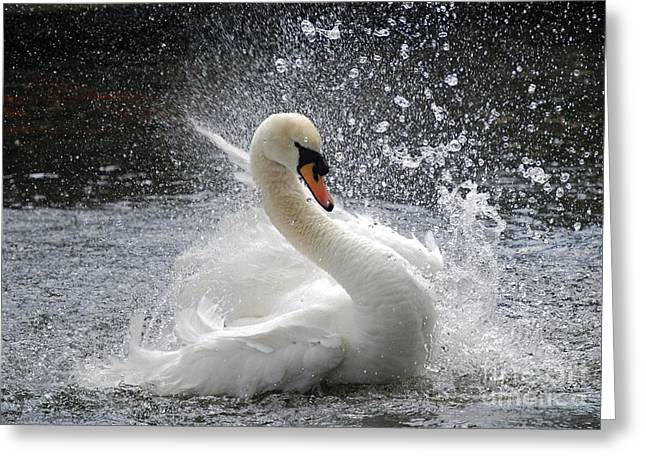 Swans... Greeting Cards - Swan Greeting Card by Kathy Gibbons