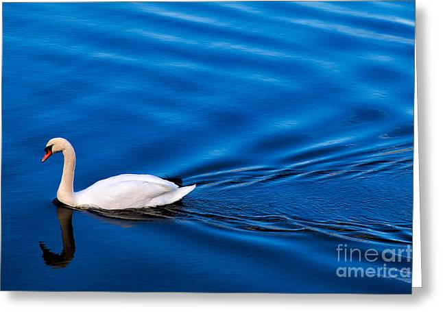 Swans... Greeting Cards - Swan Lake Greeting Card by Adrian Evans