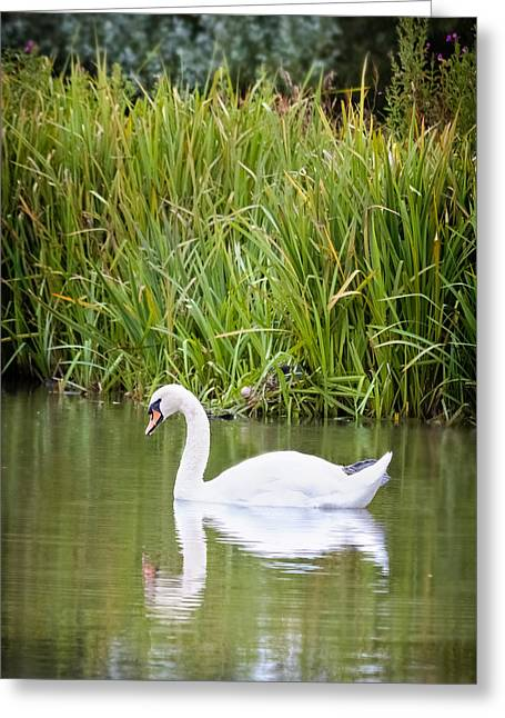 Smart Greeting Cards - Swan Lake Greeting Card by Christine Smart
