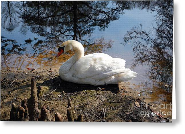 Jeff Mcjunkin Greeting Cards - Swan Lake I Greeting Card by Jeff McJunkin