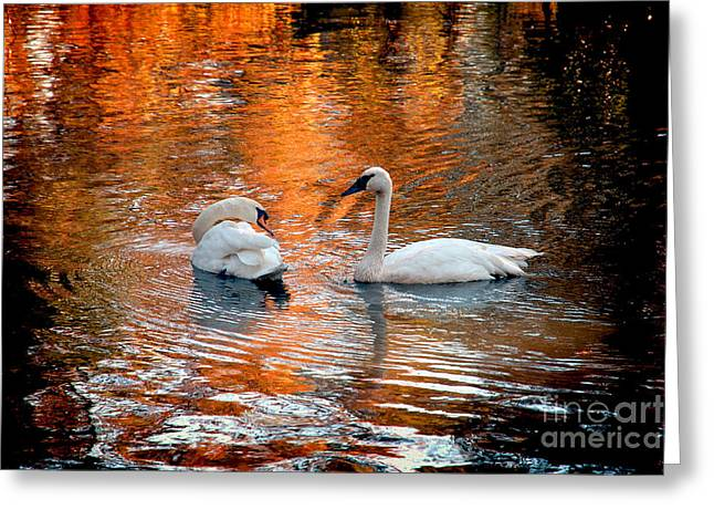 Jeff Mcjunkin Greeting Cards - Swan Lake II Greeting Card by Jeff McJunkin