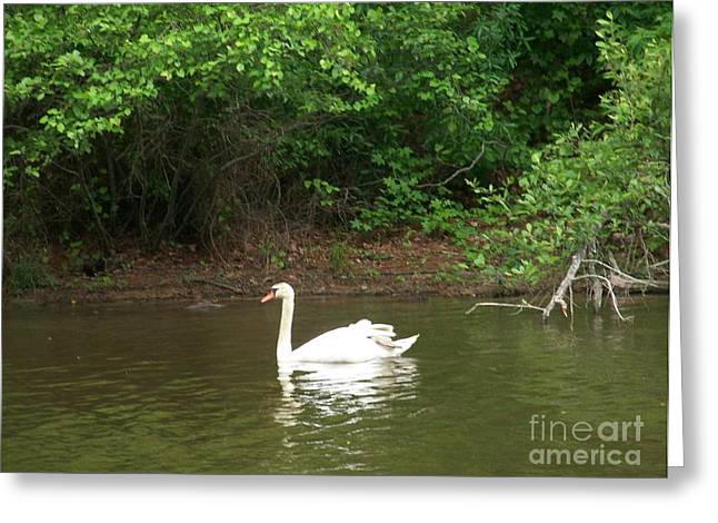 Kevin Croitz Greeting Cards - Swan Lake Greeting Card by Kevin Croitz