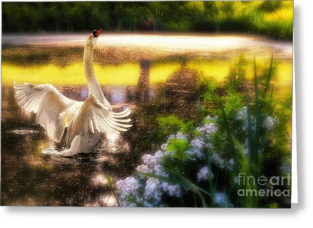Stretching Wings Greeting Cards - Swan Lake Greeting Card by Lois Bryan