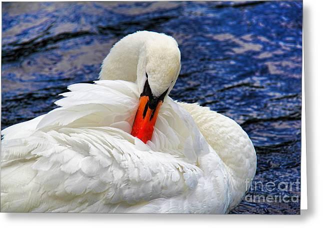 Swans... Greeting Cards - Swan Lake Greeting Card by Mariola Bitner