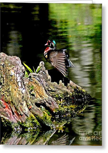 Jeff Mcjunkin Greeting Cards - Swan Lake Woody Greeting Card by Jeff McJunkin