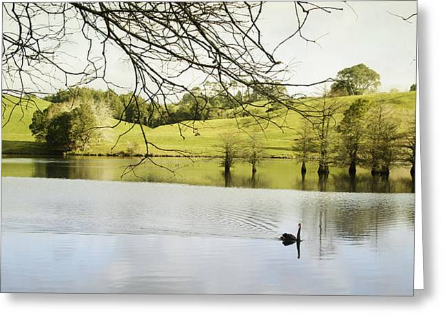 Swan Greeting Card by Les Cunliffe