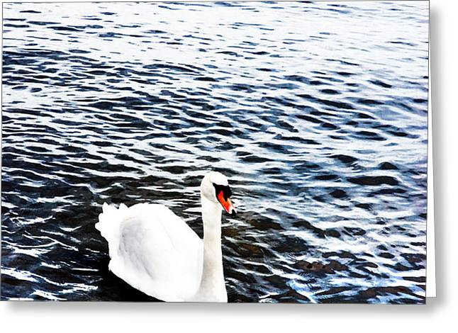 Swan Greeting Card by Mark Rogan