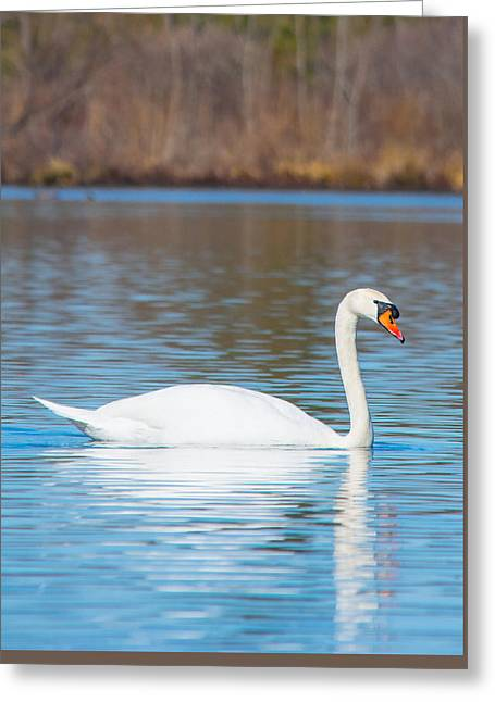 Reflection On Calm Pond Greeting Cards - Swan on a Lake Greeting Card by Parker Cunningham