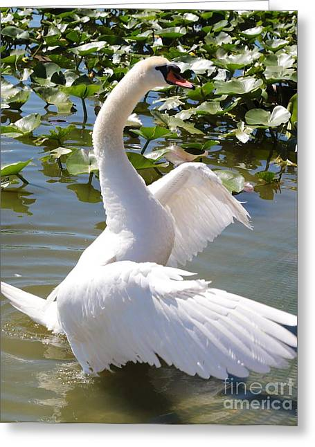 Swan Pose Greeting Card by Carol Groenen