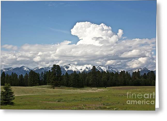 Recently Sold -  - Snow Capped Greeting Cards - Swan Range and Meadow Greeting Card by June Hatleberg Photography