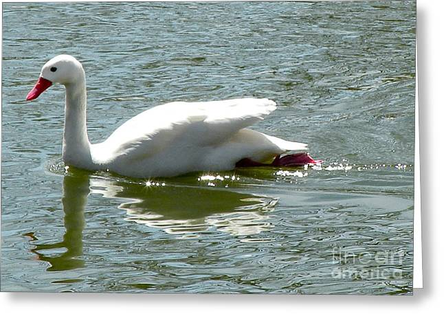 Mother Goose Greeting Cards - Swan Reflection Greeting Card by Terry Weaver