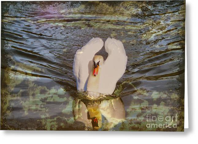 Swan Reflections Greeting Card by Cheryl Young