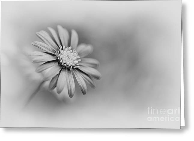 Swans... Greeting Cards - Swan River Daisy Monochrome Greeting Card by Tim Gainey