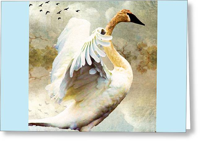 Swans... Greeting Cards - Swan Sense Greeting Card by Kathy Bassett