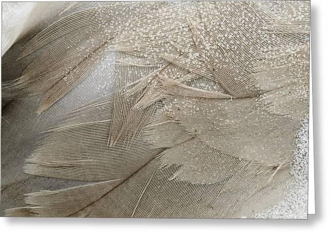 Alaska Greeting Cards - Swan Song I Greeting Card by Susan Serna