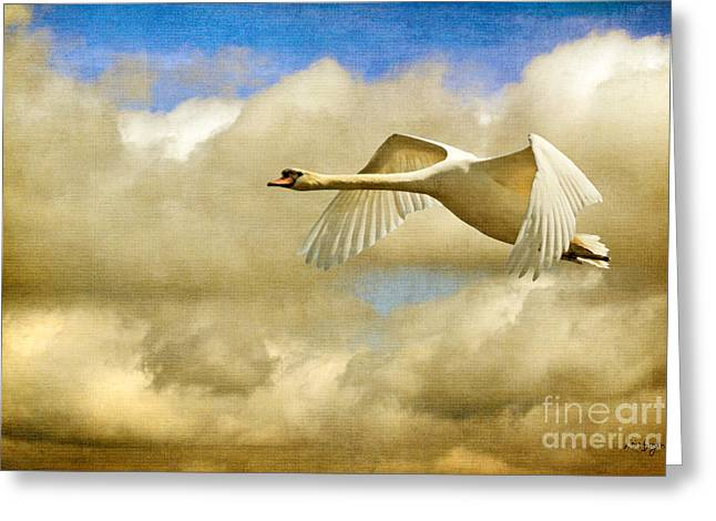 Flying Swan Greeting Cards - Swan Song Greeting Card by Lois Bryan