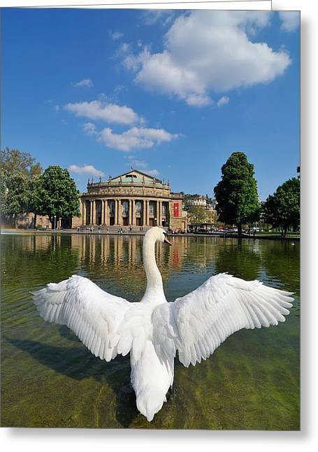 Haus Photographs Greeting Cards - Swan spreads wings in front of State Theatre Stuttgart Germany Greeting Card by Matthias Hauser
