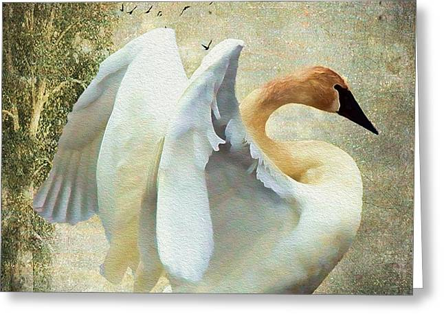 Book Cover Art Greeting Cards - Swan - Summer Home Greeting Card by Kathy Bassett