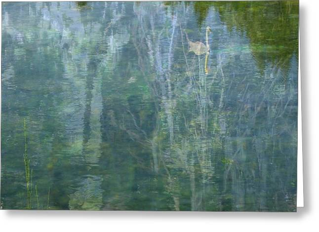 Swanee River Greeting Card by Lyn  Perry