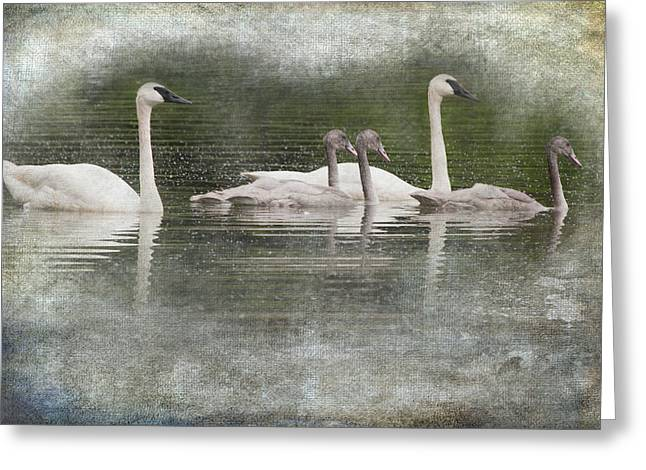 Flying Swan Greeting Cards - Swans and Cygnets on Wintergreen Lake Greeting Card by Randall Nyhof
