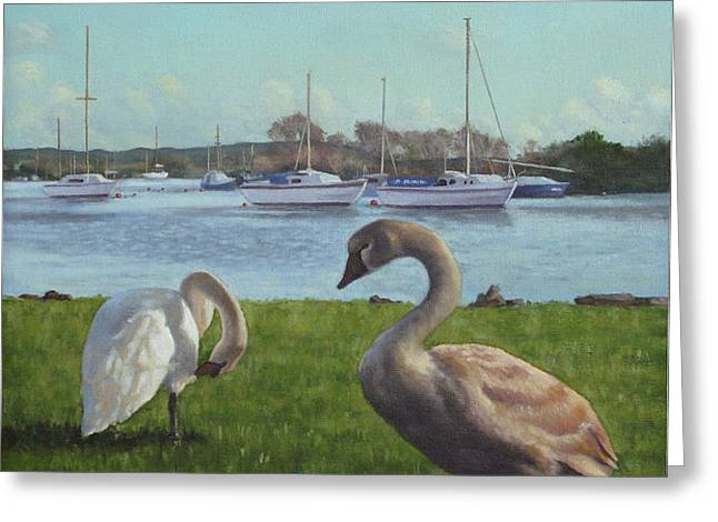 swans at Christchurch harbour Greeting Card by Martin Davey