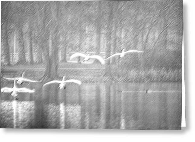 Swan Art Greeting Cards - Swans flying over the lake Greeting Card by Toppart Sweden