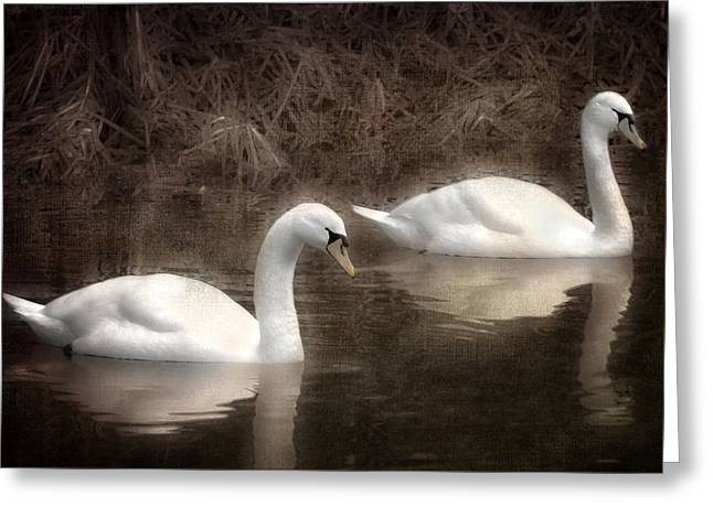 Swans... Greeting Cards - Swans for life Greeting Card by Jason Green