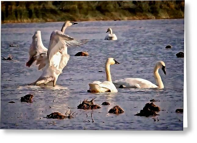 Loyality Greeting Cards - Swans Greeting Card by Karma Ganzler