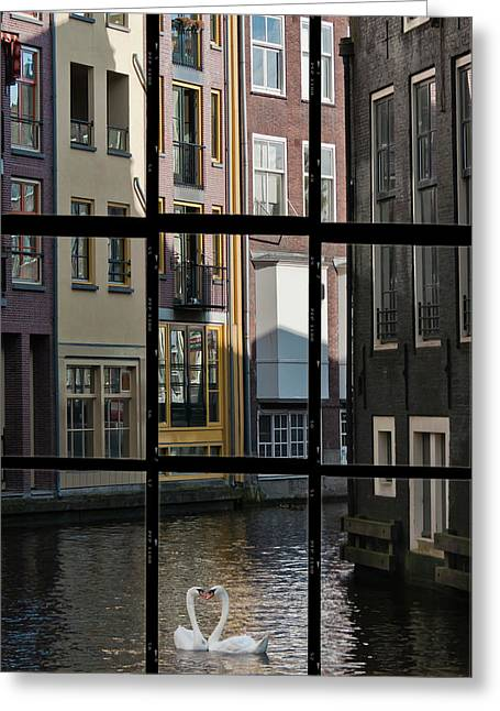 River Scenes Photographs Greeting Cards - Swans love Amsterdam Greeting Card by Joan Carroll