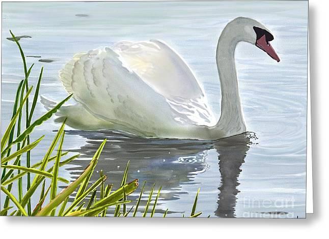 Joan A Hamilton Greeting Cards - Swans Morning Swim Greeting Card by Joan A Hamilton