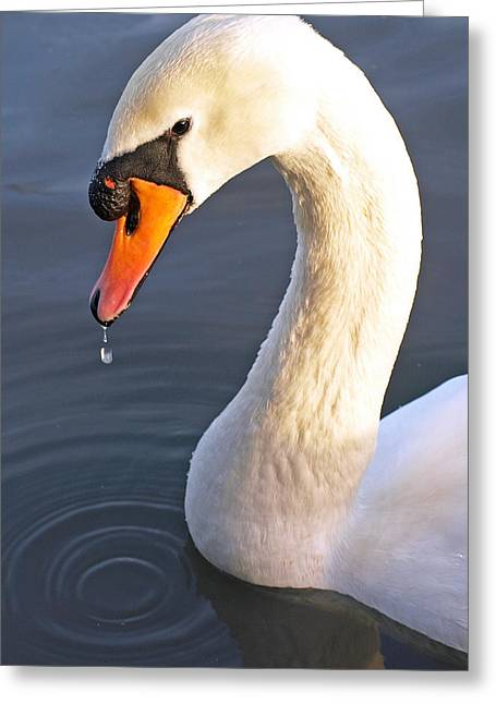 White Swan Greeting Cards - Swans Neck Greeting Card by Gill Billington