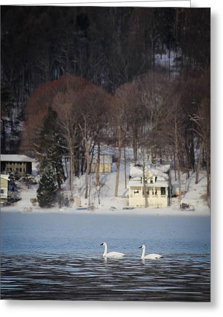 Keuka Greeting Cards - Swans on Keuka Lake Greeting Card by Meegan Streeter