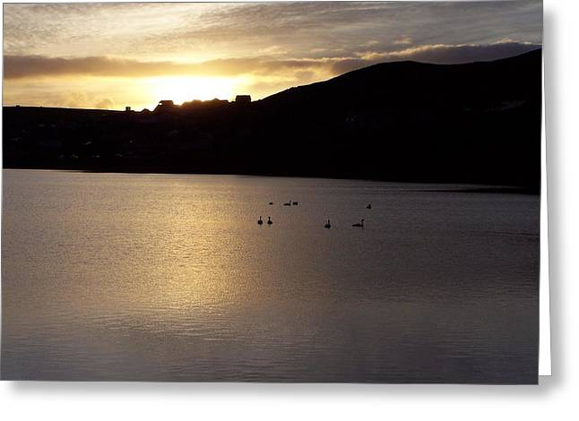 Swans On Loch Greeting Card by George Leask