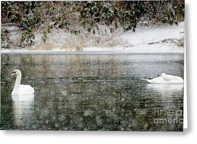 Snow Scene Mixed Media Greeting Cards - Swans on snowy lake winter landscape Greeting Card by adSpice Studios