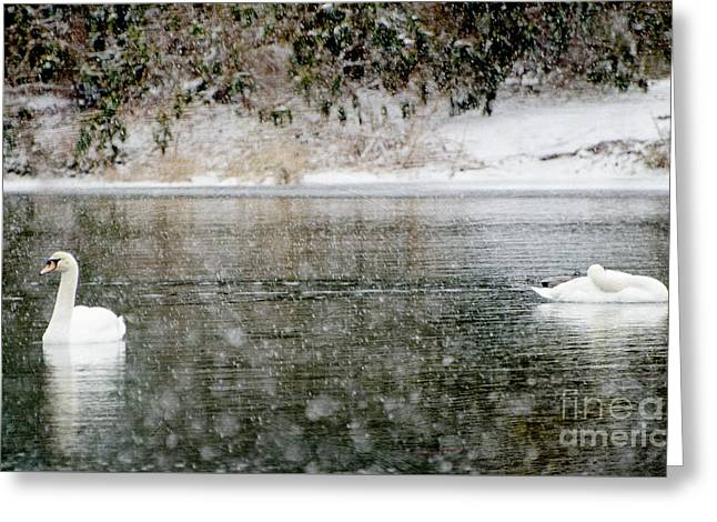 Snow Scene Mixed Media Greeting Cards - Swans on snowy lake winter landscape Greeting Card by ArtyZen Studios - ArtyZen Home
