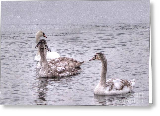 On The Beach Pyrography Greeting Cards - Swans On The Lake In Winter Greeting Card by Yury Bashkin
