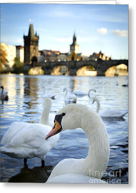 Tower Pyrography Greeting Cards - Swans on Vltava river Greeting Card by Jelena Jovanovic