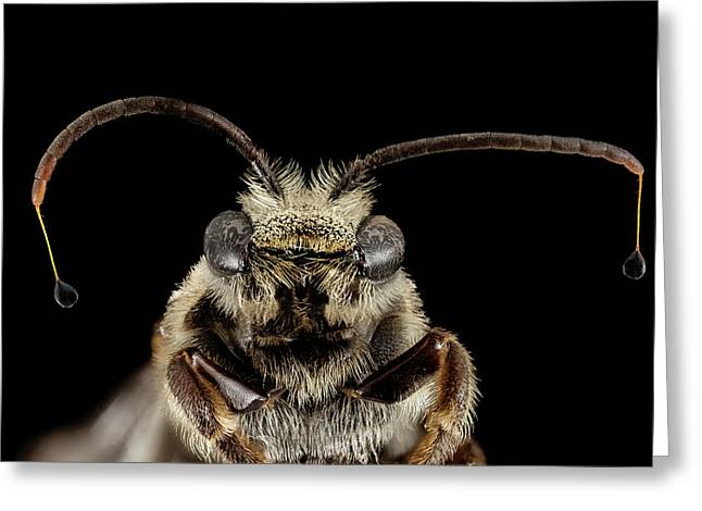 Sweat Bee Greeting Card by Us Geological Survey